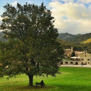 albero-lamoli-marche (3)