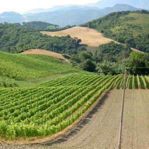 azienda-vitivinicola-la-montata